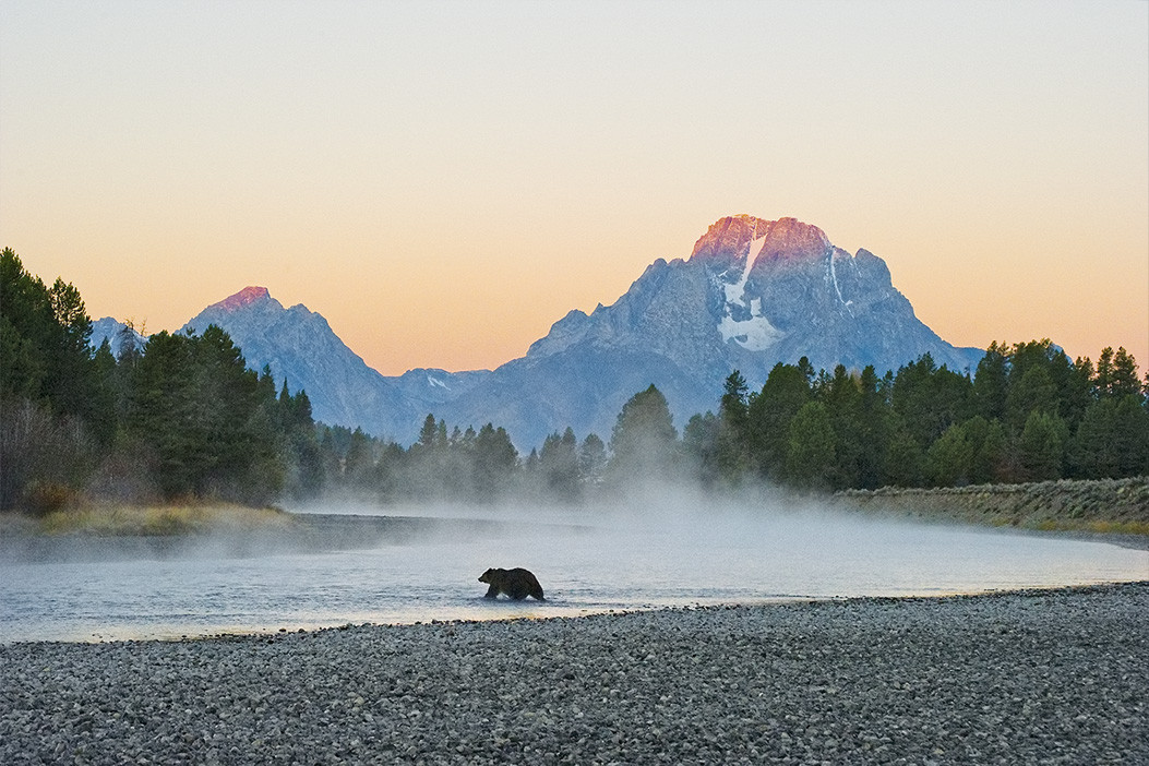 Limited Edition Print titled First Light - Grizzly Bear