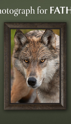 Limited Edition Print titled Eyes of the Wolf