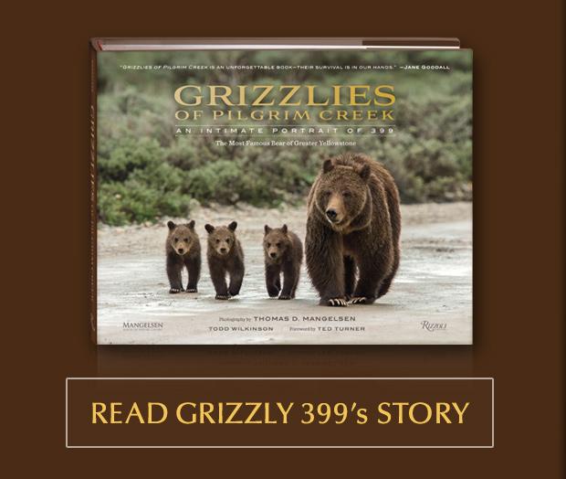 Grizzlies of Pilgrim Creek An Intimate Portrait of 399