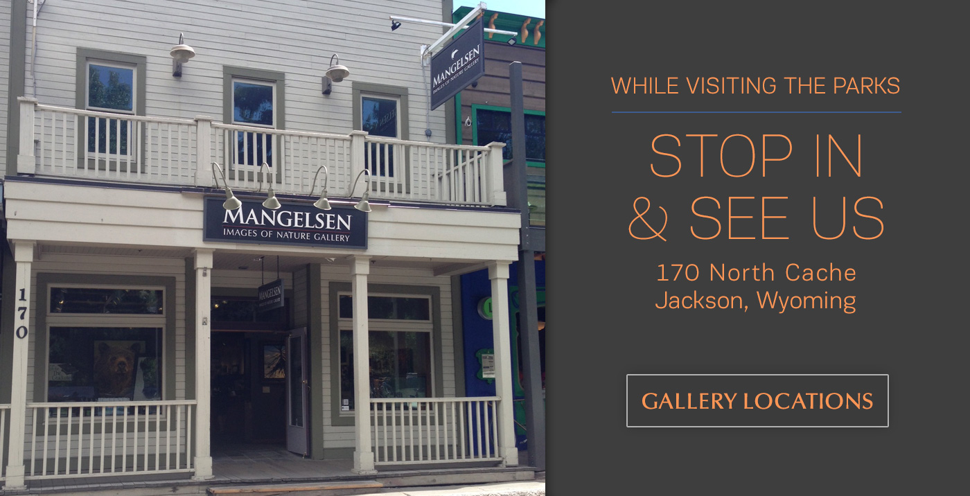 Visit the Mangelsen Images of Nature Gallery in Jackson, Wyoming or Shop Online.