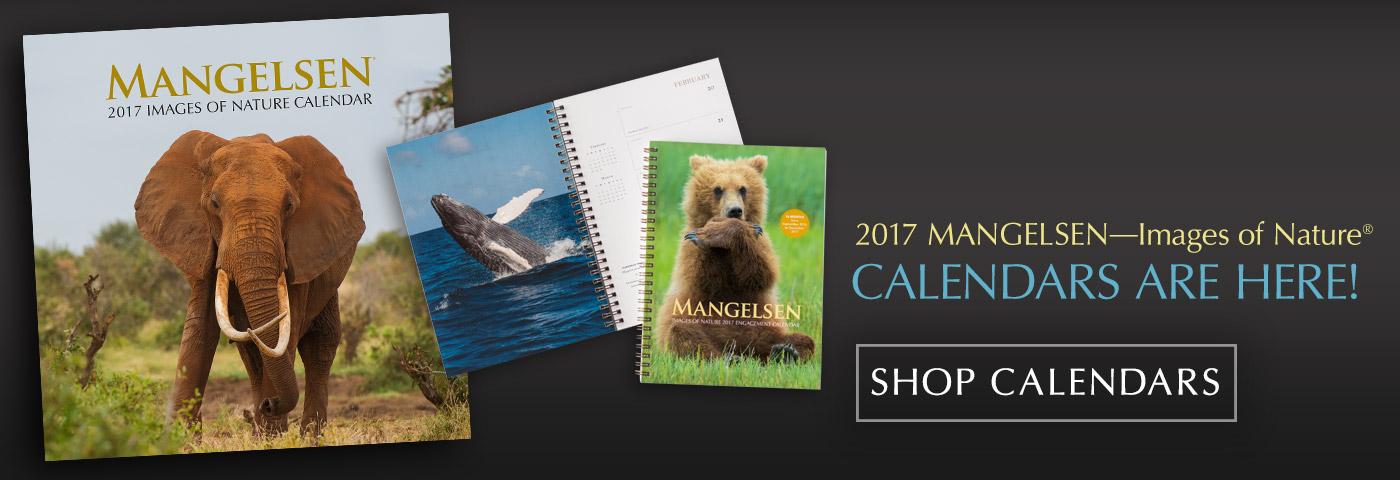 Mangelsen 2017 Calendars are here!