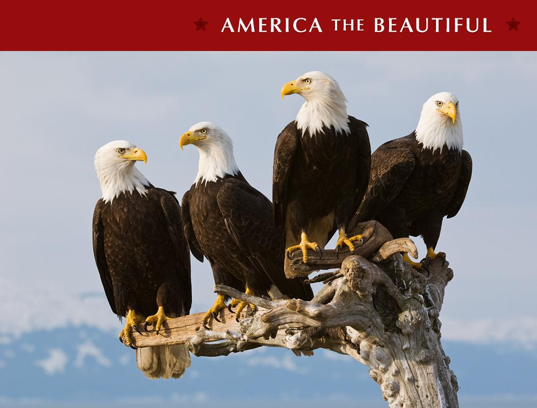 Limited Edition titled Beach Patrol photographed on the Kenai Peninsula, Alaska