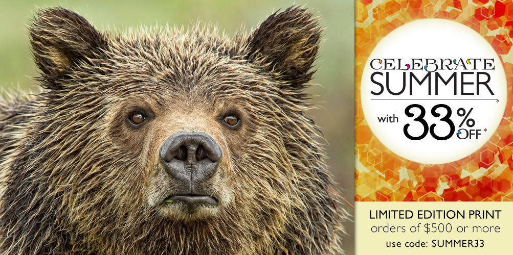 Limited Edition Print titled Eyes of the Grizzly, shown cropped