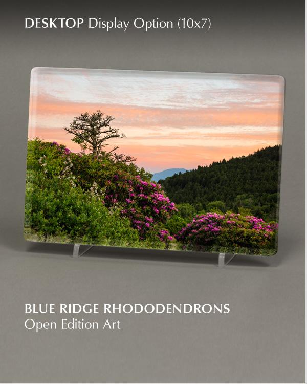 Blue Ridge Rhododendrons   Desktop - Open Edition Art