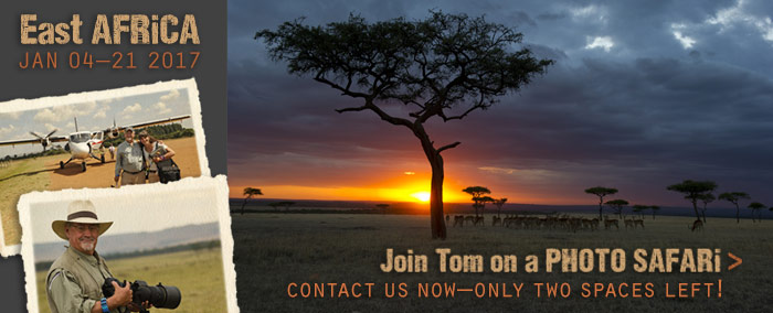 Join Tom on a Photo Safari to East Africa.