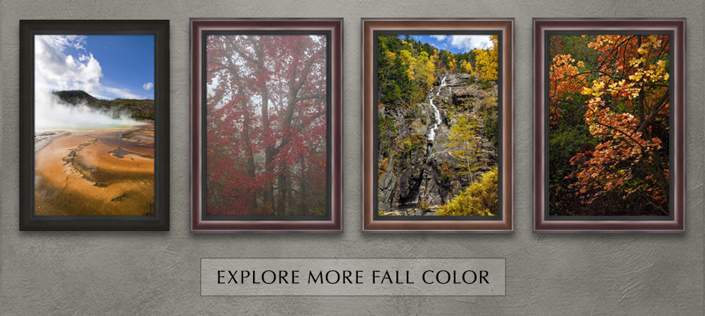 Explore more fall color images
