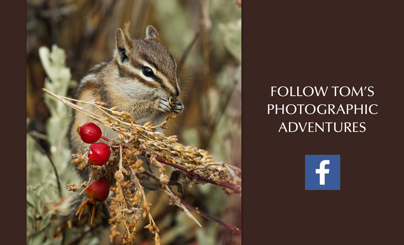 Follow Tom's Photographic Adventures on Facebook