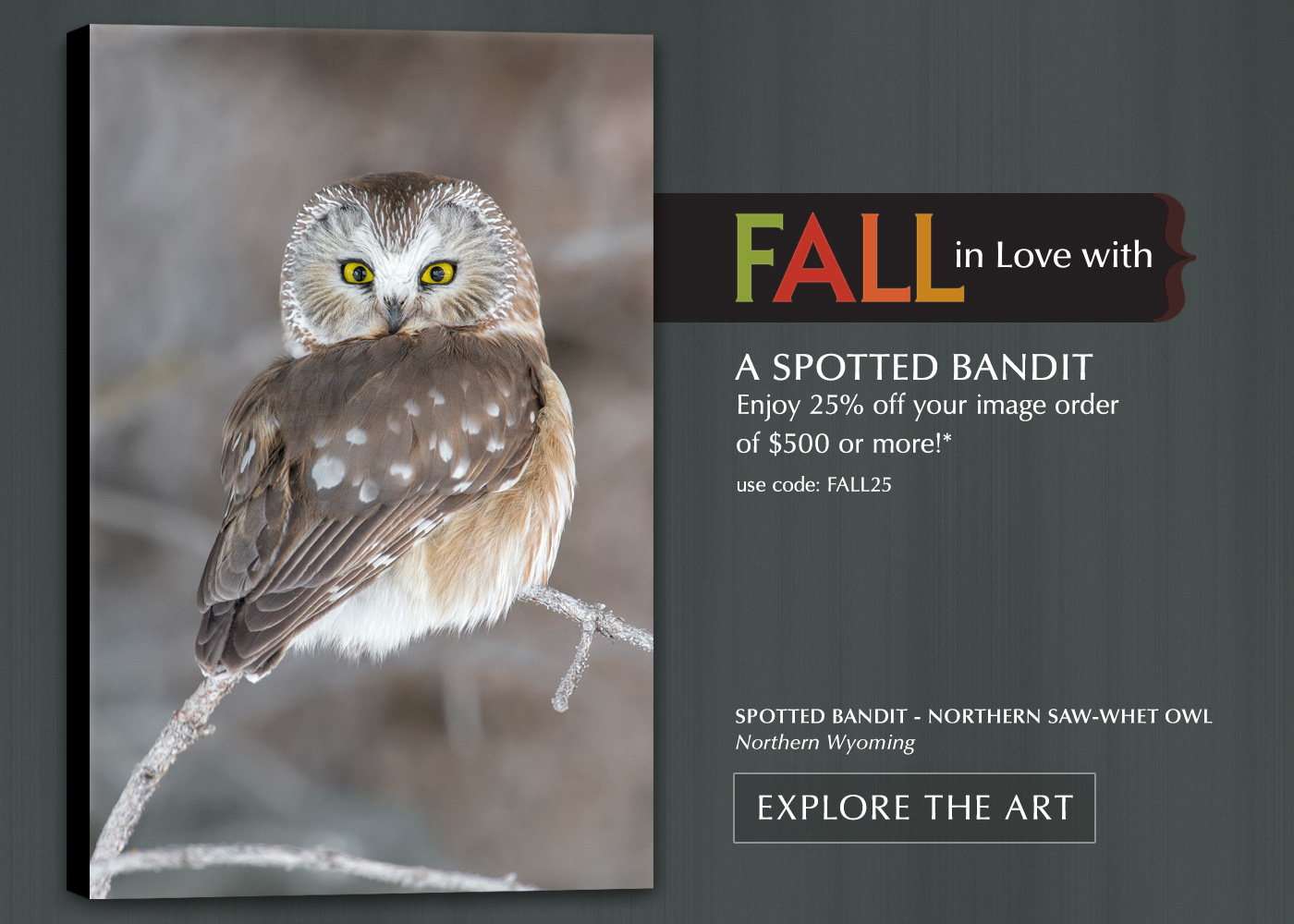 FALL in Love with a Spotted Bandit