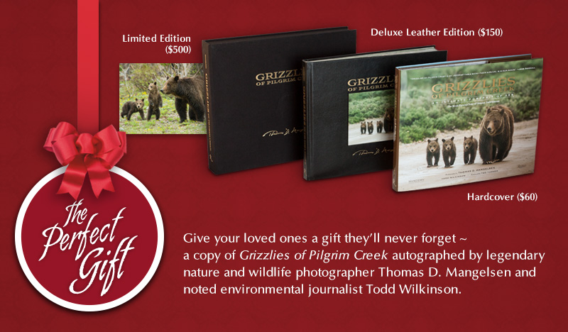 Grizzlies of Pilgrim Creek is the perfect gift for all ages
