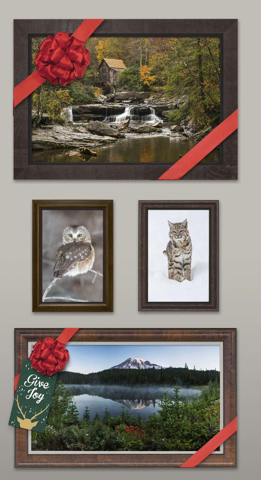 New release images now premiering in MANGELSEN Images of Nature Galleries