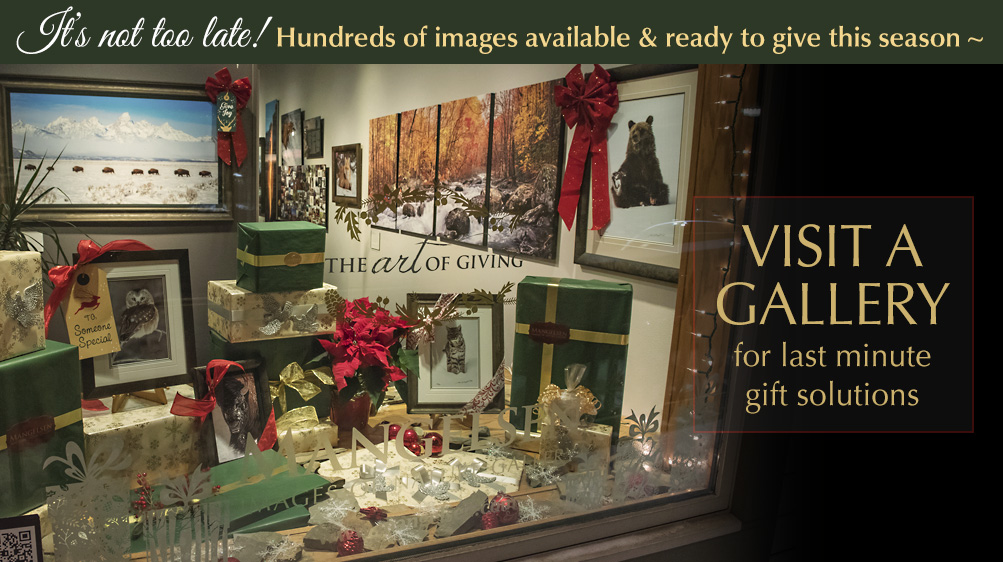 Visit one of our eight gallery locations for your last minute holiday gifts.