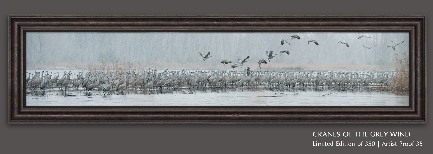 Limited Edition titled Cranes of the Grey Wind
