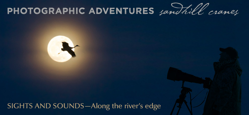 Sights and Souns of Sandhill Cranes
