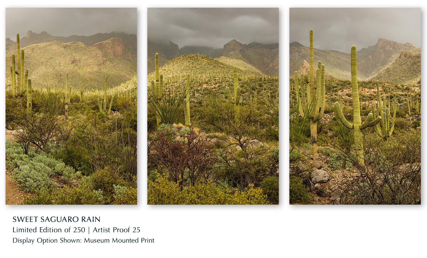 Limited Edition titled Sweet Saguaro Rain