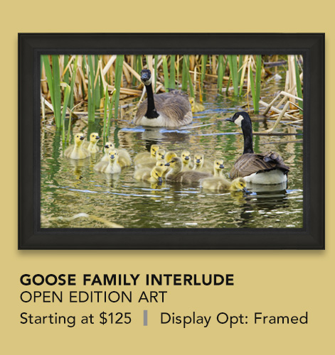 Open Edition titled Goose Family Interlude