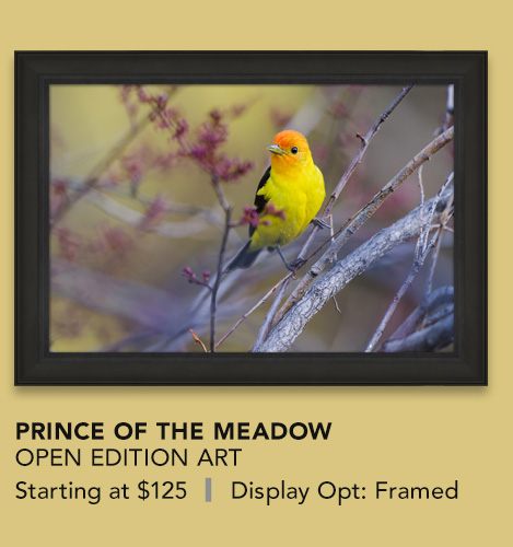 Open Edition Art titled Prince of the Meadow
