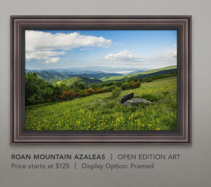 Framed Open Edition Art titled Roan Mountain Azaleas