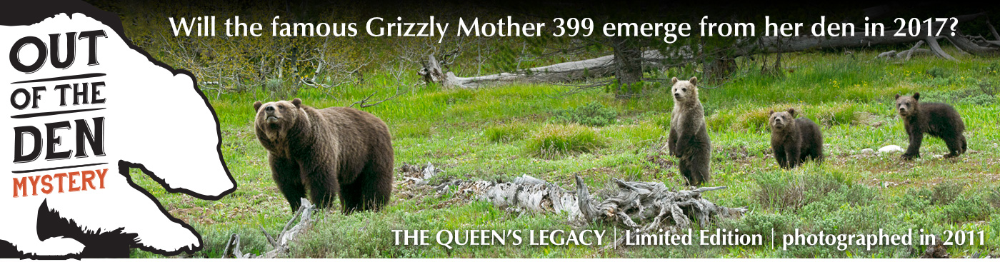 Limited Edition titled The Queens Legacy - Grizzly 399