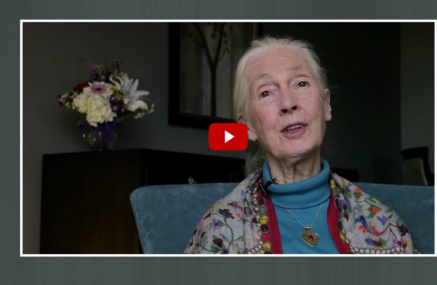Watch video of Dr. Jane Goodall