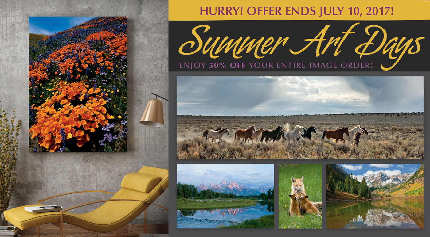 Summer Art Days at the Mangelsen Images of Nature Gallery