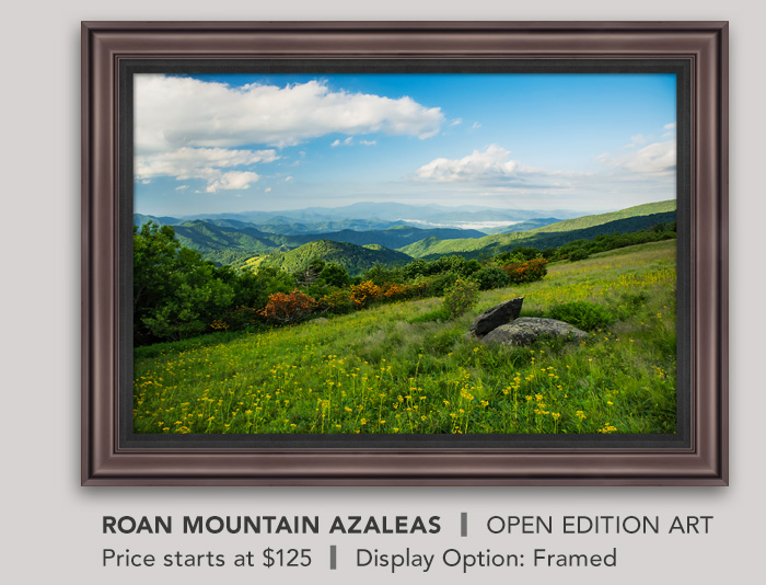 Roan Mountain Azaleas - Framed, Open Edition