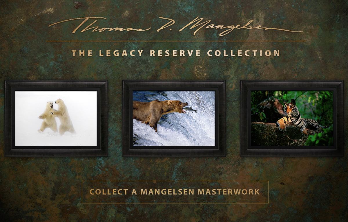Unveiling the Legacy Reserve Collection of Masterworks by Thomas D. Mangelsen