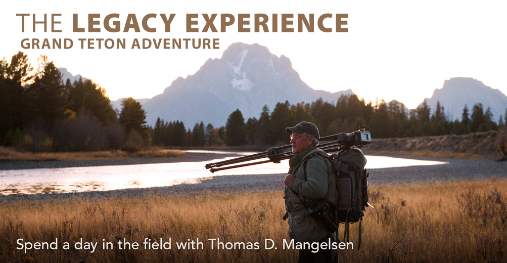 The Legacy Experience with Thomas D. Mangelsen