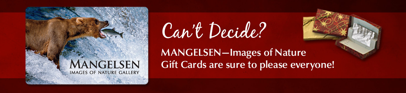 Can't decide? Mangelsen gift cards are sure to please everyone on your list!