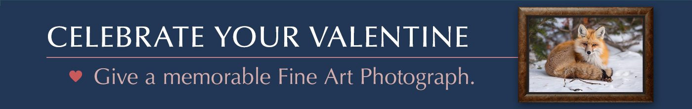 Give your Valentine a memorable Mangelsen Fine Art Photograph.