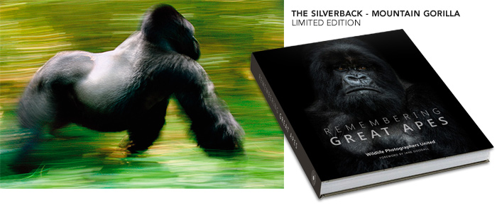 Remembering Great Apes will be the third book in the acclaimed wildlife series. All profits will go to great ape protection projects.