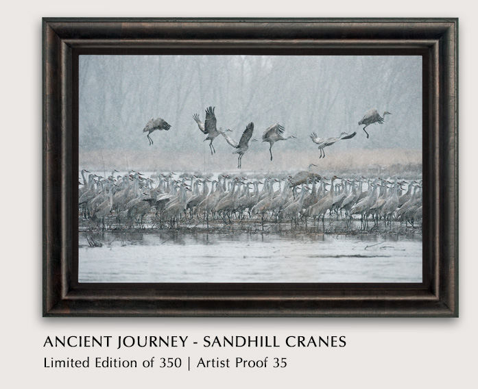 Limited Edition titled Ancient Journey - Sandhill Cranes