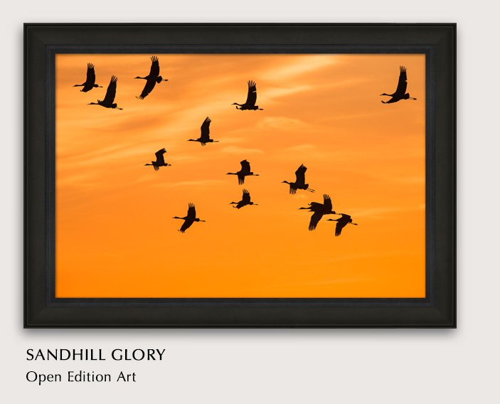 Open Edition titled Sandhill Glory
