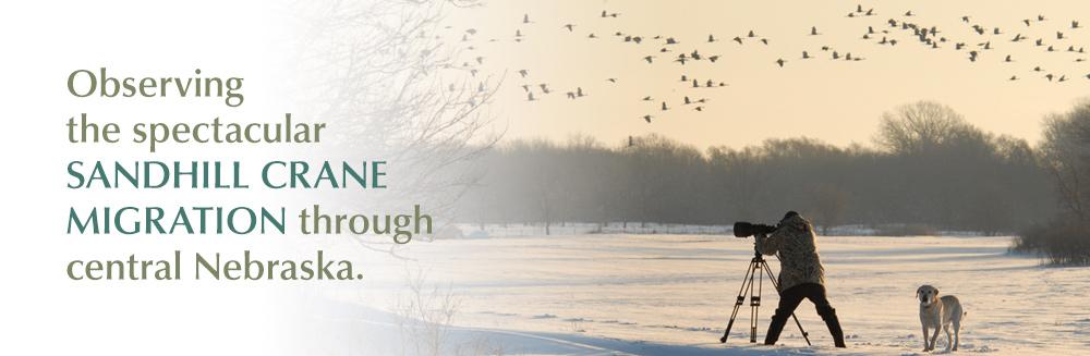 Celebrate the wondrous Sandhill Crane migration through central Nebraska