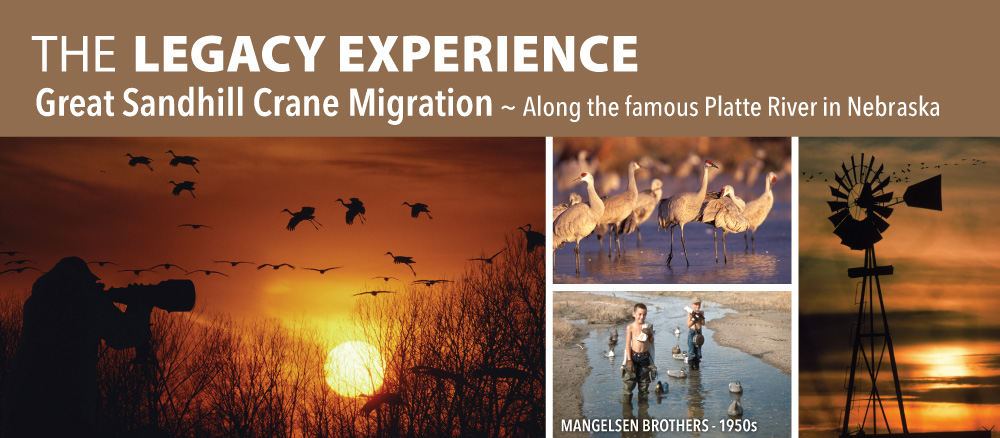 The Legacy Experience: Great Sandhill Crane Migration, Along the Famous Platte River in Nebraska