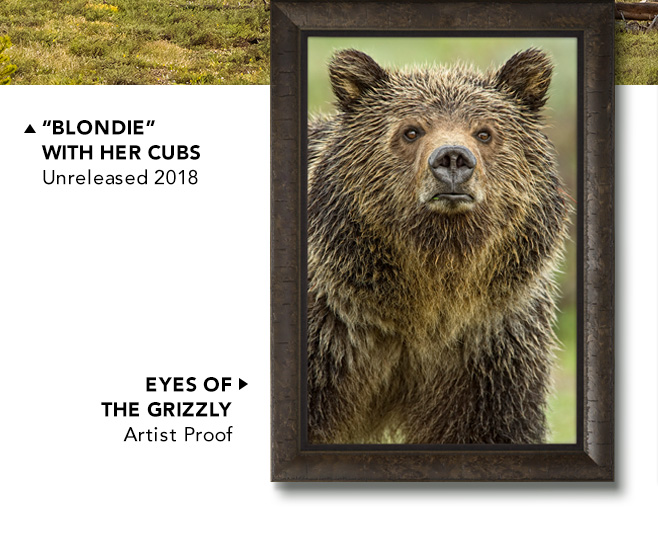 Eyes of the Grizzly | Artist Proof
