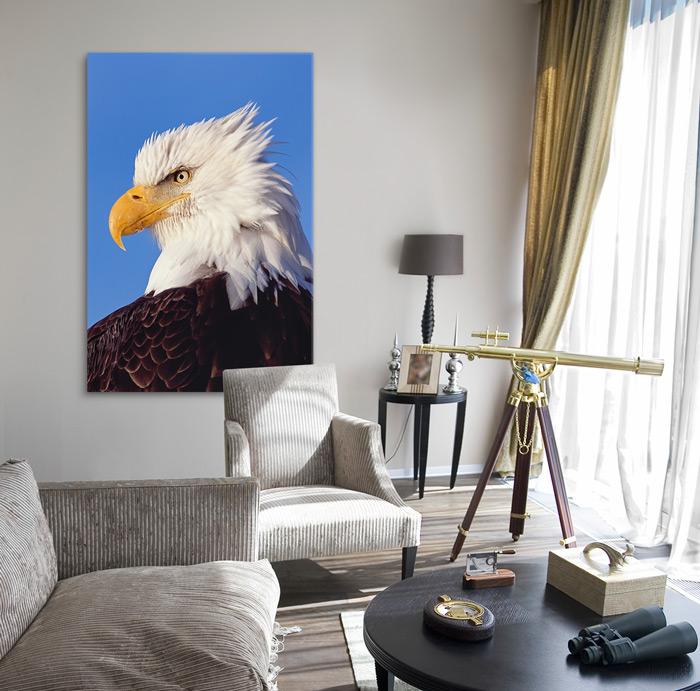 Mangelsen's Limited Edition titled True Patriot - Bald Eagle