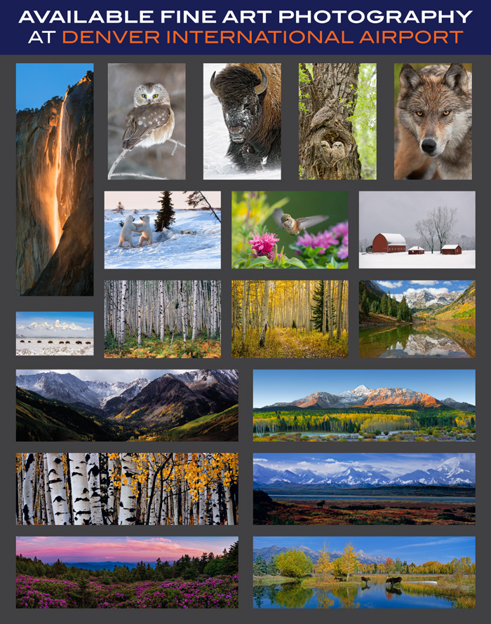 Offer is only available at the Mangelsen Images of Nature Gallery located inside the Denver International Airport.