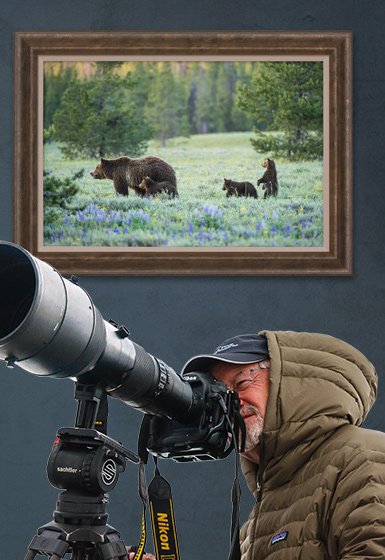 Shooting grizzly bears Mangelsen Style, through a camera lens.
