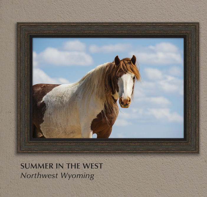 Mangelsen's New Limited Edition titled Summer in the West