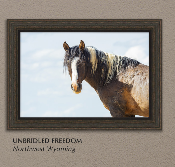 Mangelsen's New Limited Edition titled Unbridled Freedo