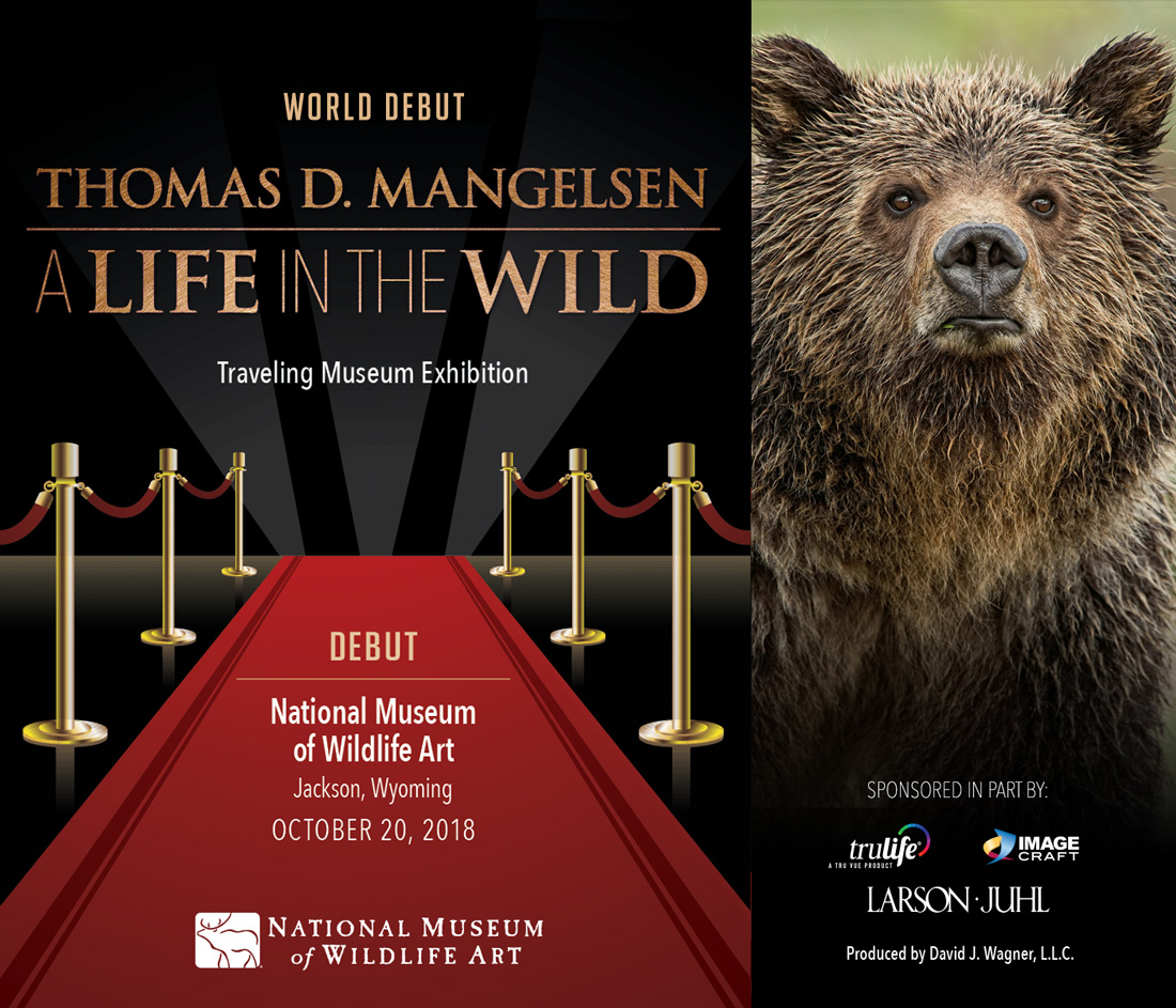 A world premire of A Life in the Wild, traveling museum exhibition