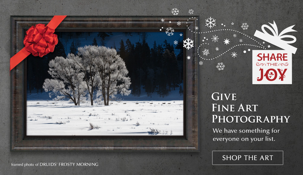 Limited Edition titled Druids' Frosty Morning Passage - Gray Wolves