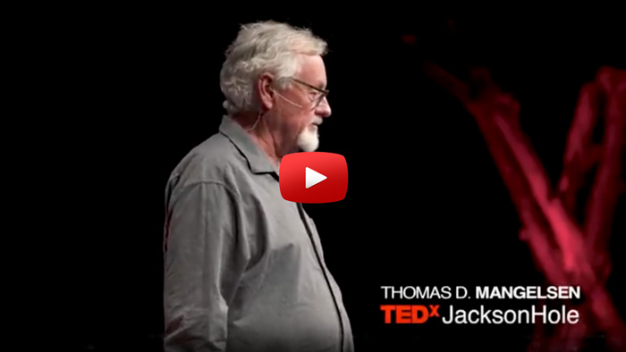 Watch The Gift of the Grizzly   Thomas D. Mangelsen   TEDxJacksonHole