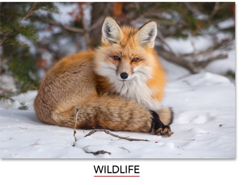 Share the joy of the outdoors with Mangelsen's Wildlife images.