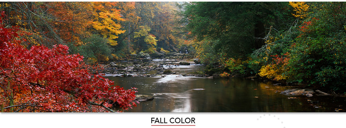 Share the joy of Fall Color 365 days a year with a these Mangelsen images.