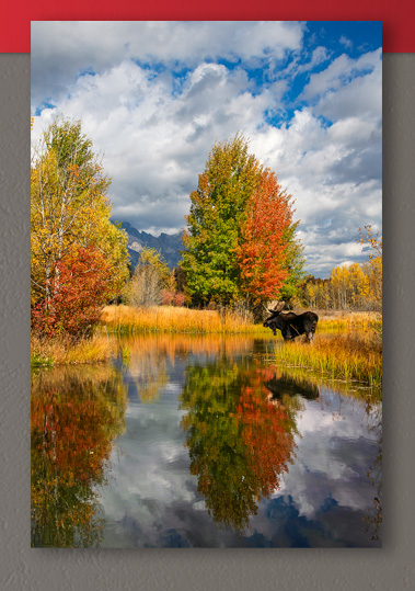 New release image titled Indian Summer at the Pond