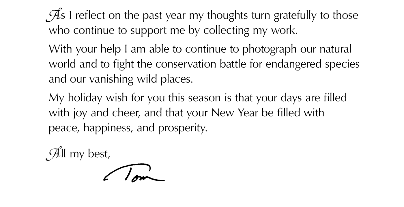 As I reflect on the past year my thoughts turn gratefully to those who continue to support me by collecting my work. With your help I am able to continue to photograph our natural world and to fight the conservation battle for endangered species and our vanishing wild places.