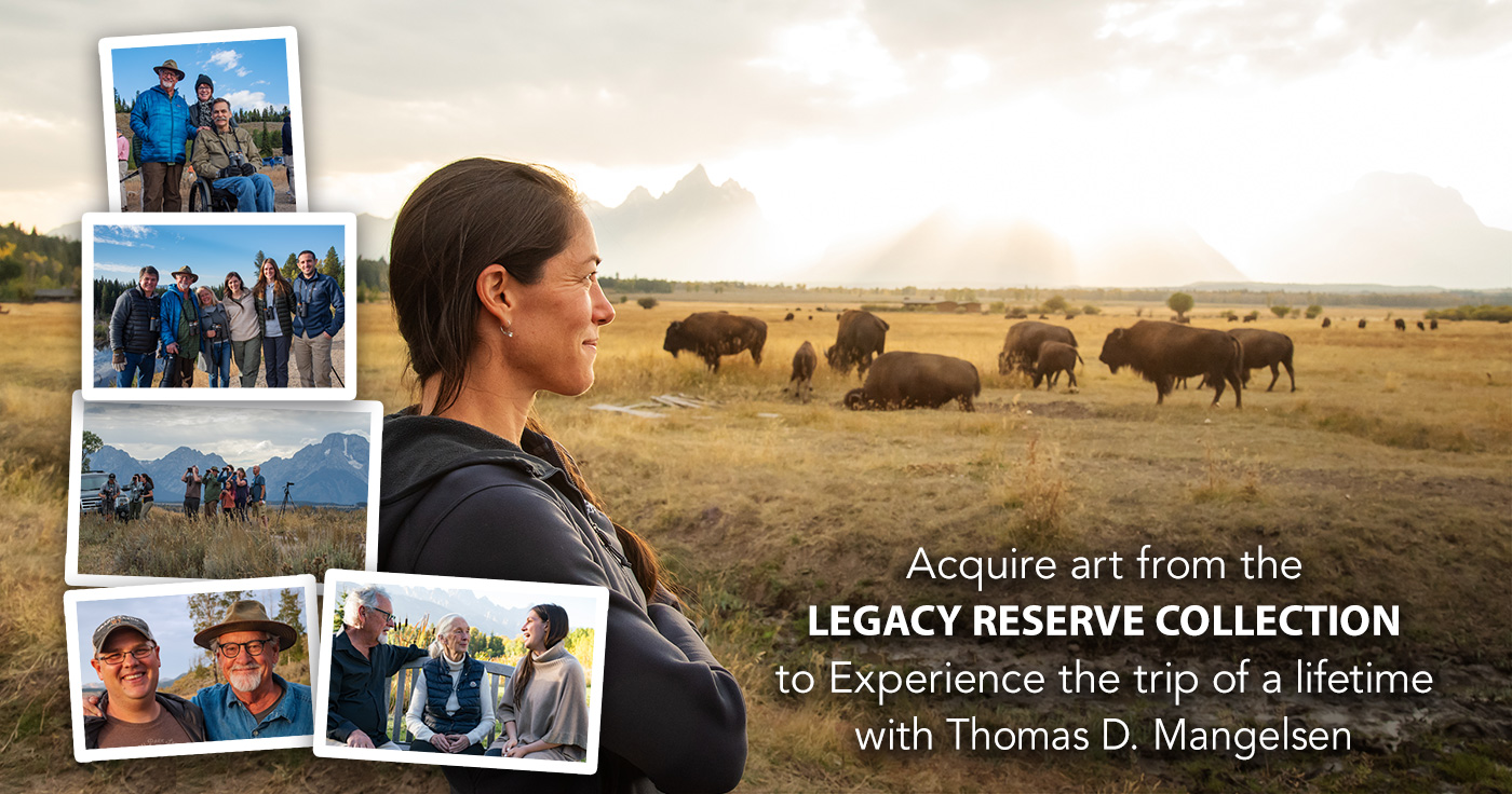 Acquire art from Mangelsen's Legacy Reserve Collection to experience the trip of a lifetime with Thomas D. Mangelsen.