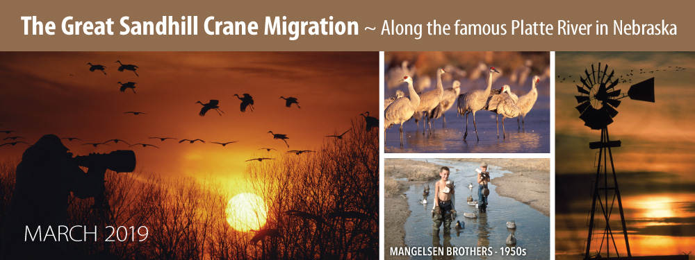 Experience the Great Sandhill Crane Migration with Thomas D. Mangelsen in March of 2019