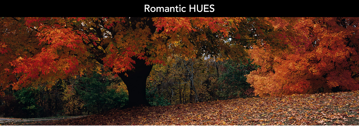 Romantic reds can warm up any room.